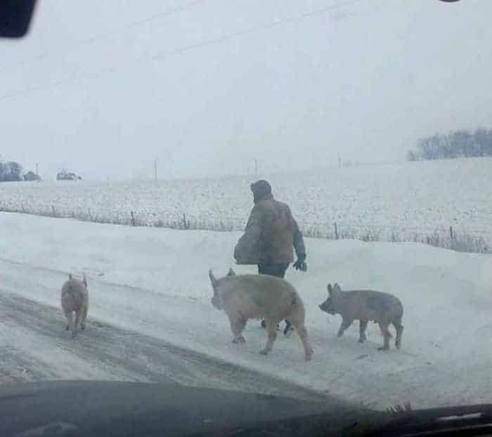 Things You Can See Only In Russia - 55 Pics -02
