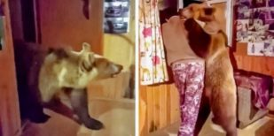 65+ Only In Russia Photos That Will Force You To Say WTF