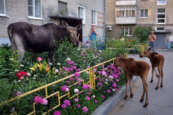 65+ Only In Russia Photos That Will Force You To Say WTF-54