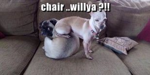 Funny Animal Pics Of The Day – Wackyy Picdump 12 (39 Photos)