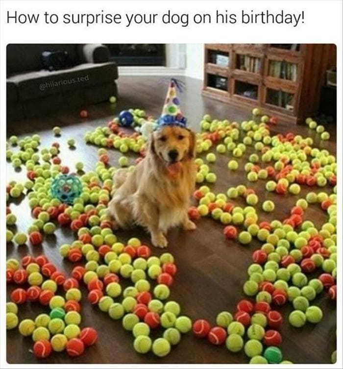 Funny Animal Pics Of The Day – Wackyy Picdump 12 (39 Photos)-29