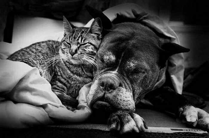 8 Funny Pics of Rare Best Friends On The World -02