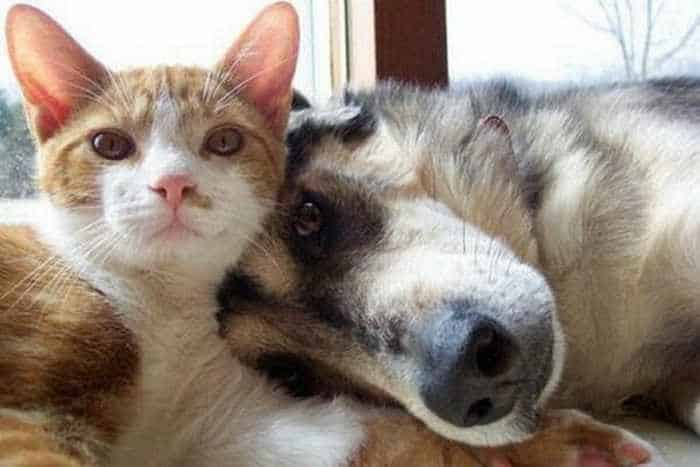 8 Funny Pics of Rare Best Friends On The World -04