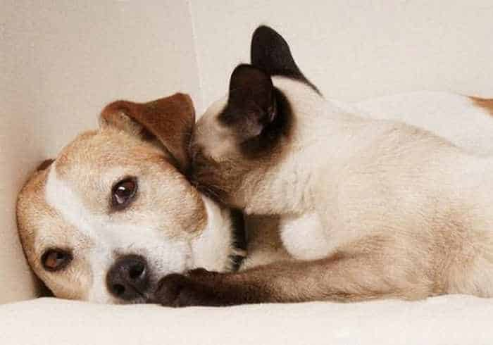 8 Funny Pics of Rare Best Friends On The World -05