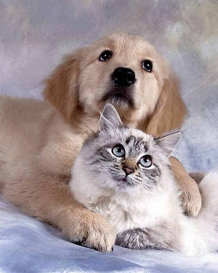8 Funny Pics of Rare Best Friends On The World -08