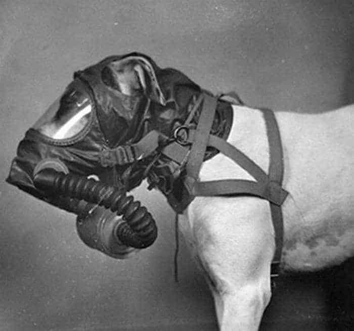 19 Funny Pictures of Respirator For Dogs -12
