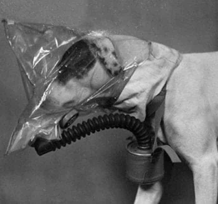 19 Funny Pictures of Respirator For Dogs -13