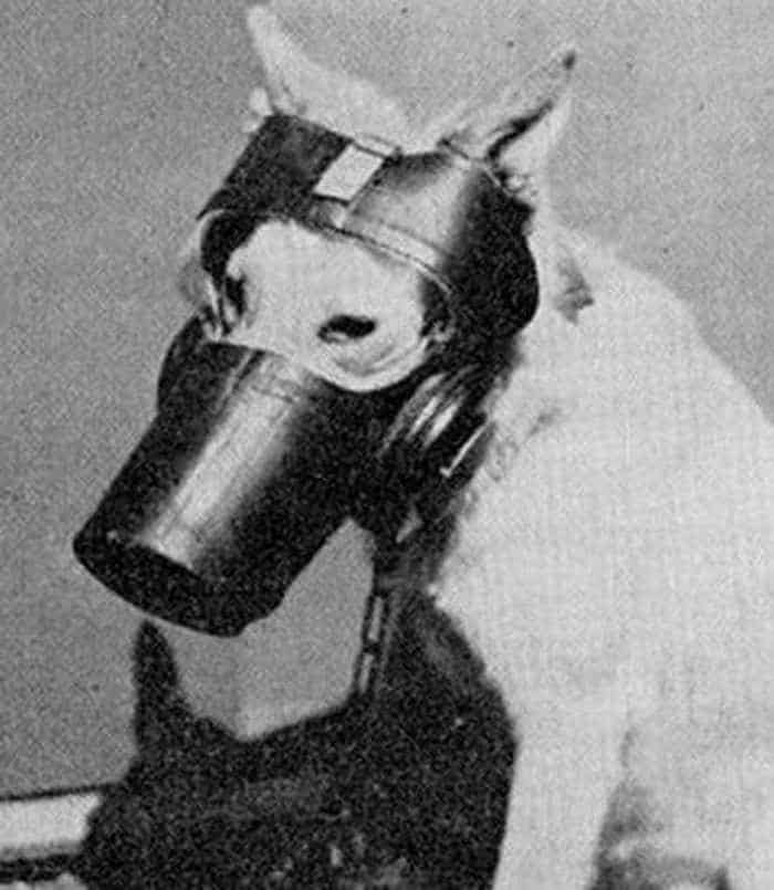 19 Funny Pictures of Respirator For Dogs -14