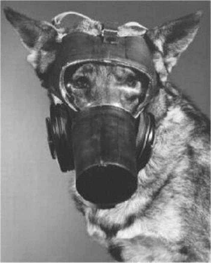 19 Funny Pictures of Respirator For Dogs -17
