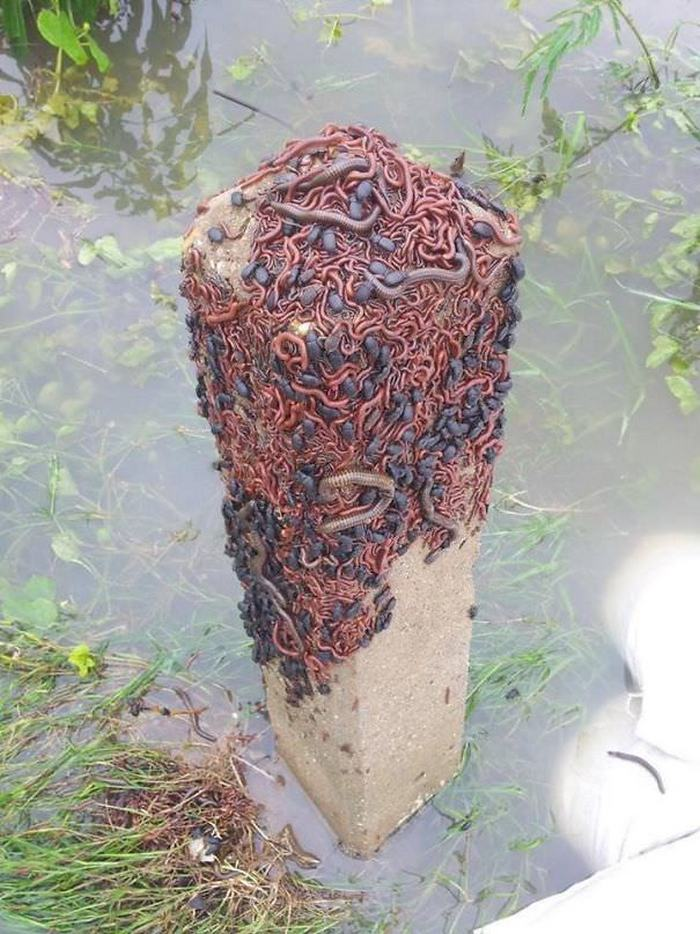 60+ Photos That Prove Nature Is Scary AF-53