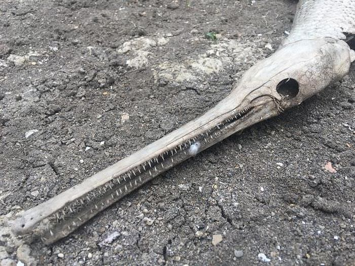 60+ Photos That Prove Nature Is Scary AF-56