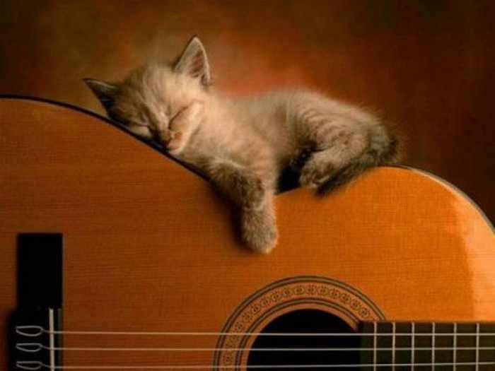 20 Awesome Funny Sleeping Cats -04