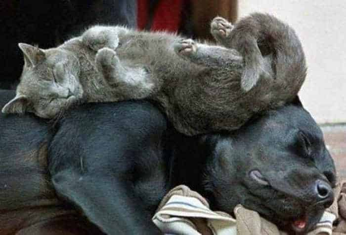 20 Awesome Funny Sleeping Cats -06