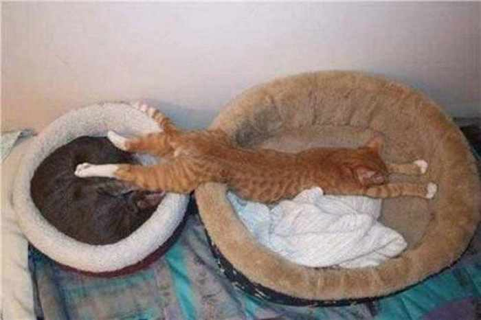 20 Awesome Funny Sleeping Cats -12