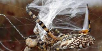 This Spider VS Mantis Battle Will Blow Your Mind – 8 Pics