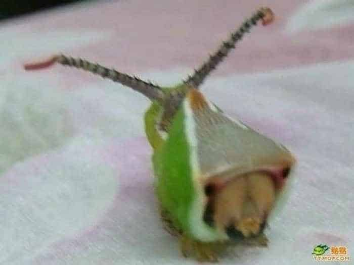 6 Funny Pictures of Unseen Strange Insect-02