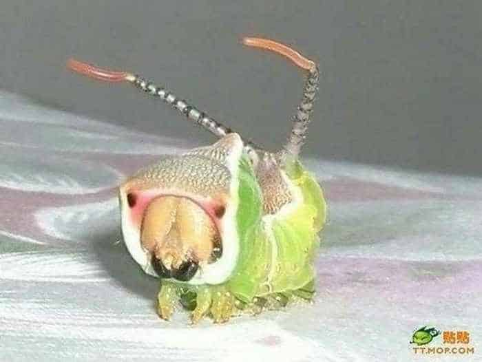 6 Funny Pictures of Unseen Strange Insect-04