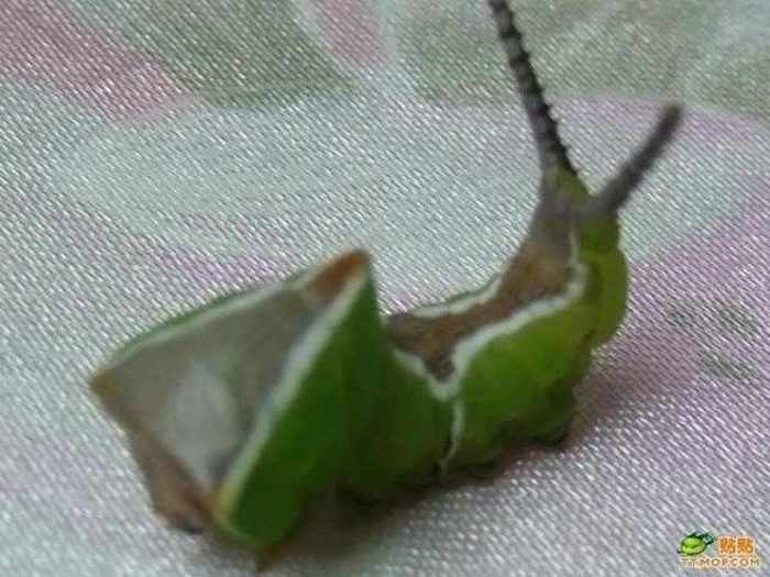 6 Funny Pictures of Unseen Strange Insect-05
