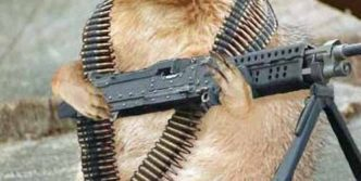 Funny Squirrel Soldier That is Ready To Attack