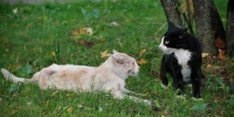 14 Funny Pictures of Cats Talking With Each Other