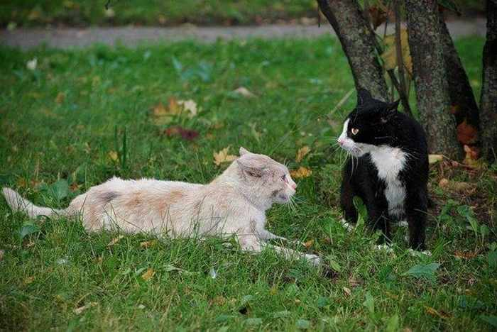 14 Funny Pictures of Cats Talking With Each Other  -05