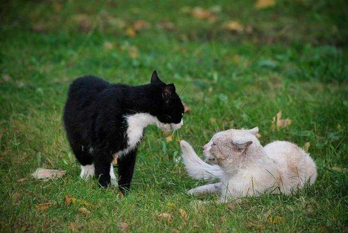 14 Funny Pictures of Cats Talking With Each Other  -06