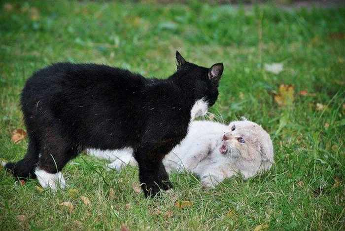 14 Funny Pictures of Cats Talking With Each Other  -07