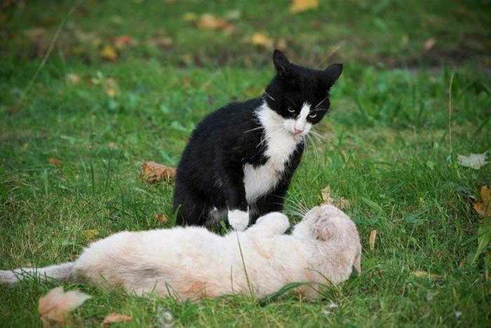 14 Funny Pictures of Cats Talking With Each Other  -08