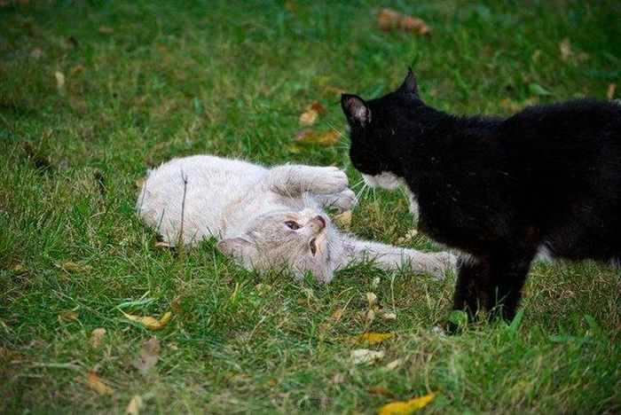 14 Funny Pictures of Cats Talking With Each Other  -09