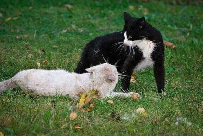 14 Funny Pictures of Cats Talking With Each Other  -10