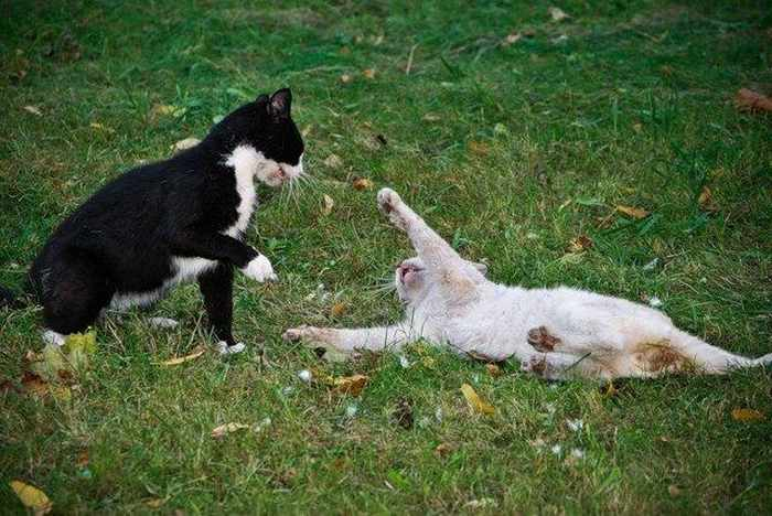 14 Funny Pictures of Cats Talking With Each Other  -12