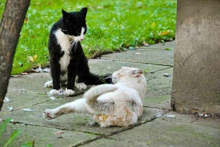14 Funny Pictures of Cats Talking With Each Other  -14