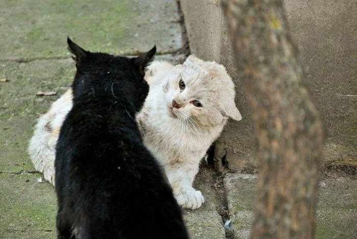 13 Funny Pictures of Talking Cats -17