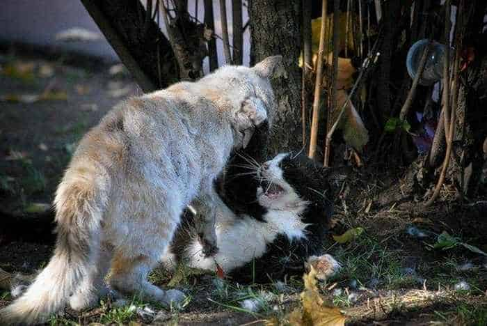 13 Funny Pictures of Talking Cats -23