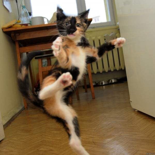 The Karate Cat That Is Dangerous