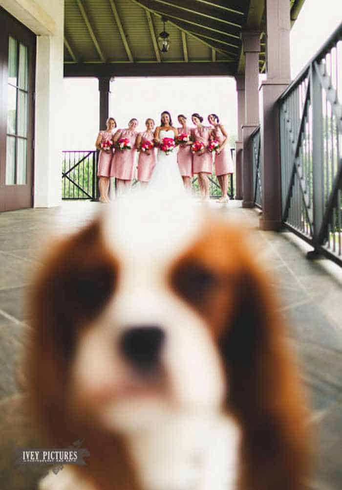 42 Hilarious Pictures of Unexpected Wedding Photobombs Will Make You LOL -12