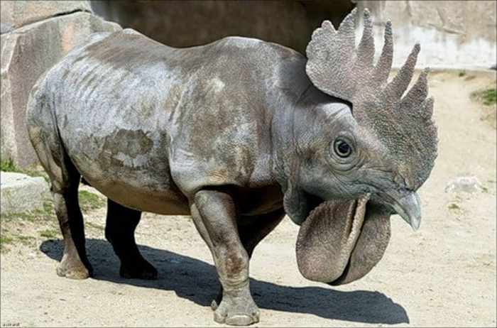 Funny Unprecedented Animals That Are Hilarious --02