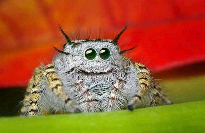 17 Incredible Close-up Shots of Unseen Insects -02