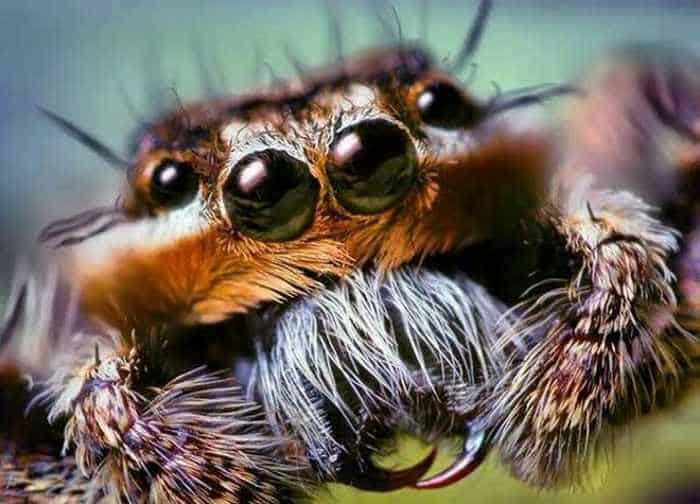 17 Incredible Close-up Shots of Unseen Insects -03