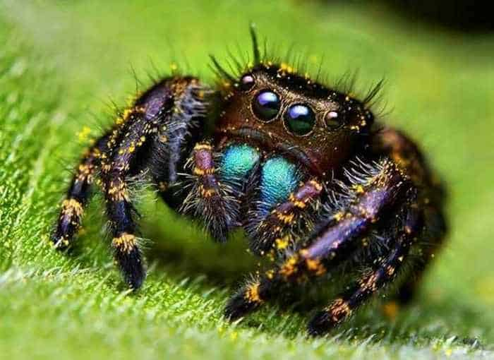 17 Incredible Close-up Shots of Unseen Insects -05
