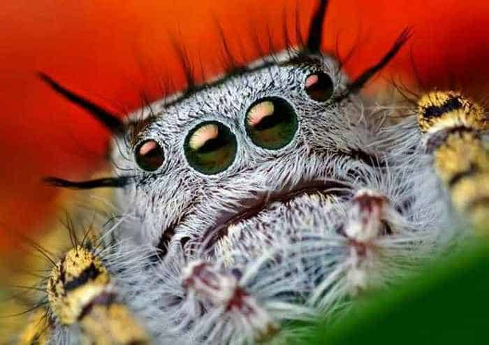 17 Incredible Close-up Shots of Unseen Insects -06