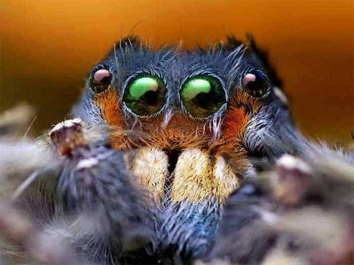 17 Incredible Close-up Shots of Unseen Insects -07