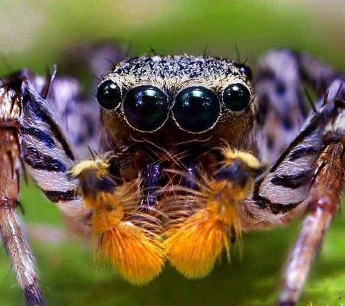 17 Incredible Close-up Shots of Unseen Insects -10
