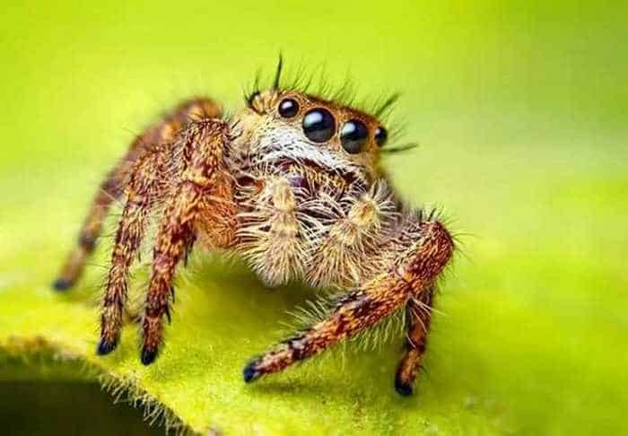 17 Incredible Close-up Shots of Unseen Insects -11