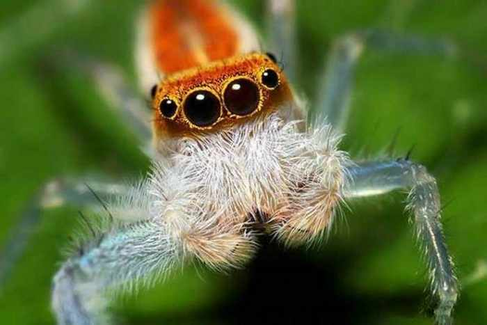 17 Incredible Close-up Shots of Unseen Insects -13