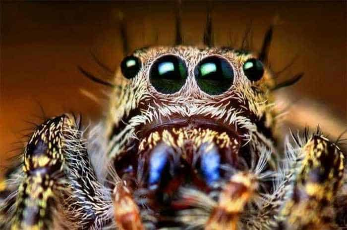 17 Incredible Close-up Shots of Unseen Insects -14