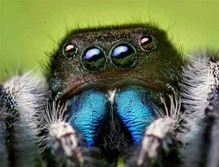 17 Incredible Close-up Shots of Unseen Insects -15