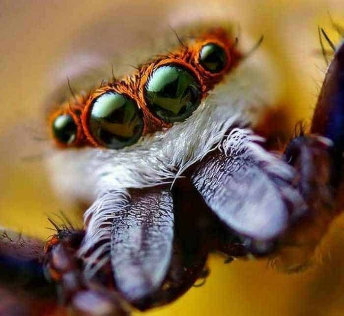 17 Incredible Close-up Shots of Unseen Insects -16