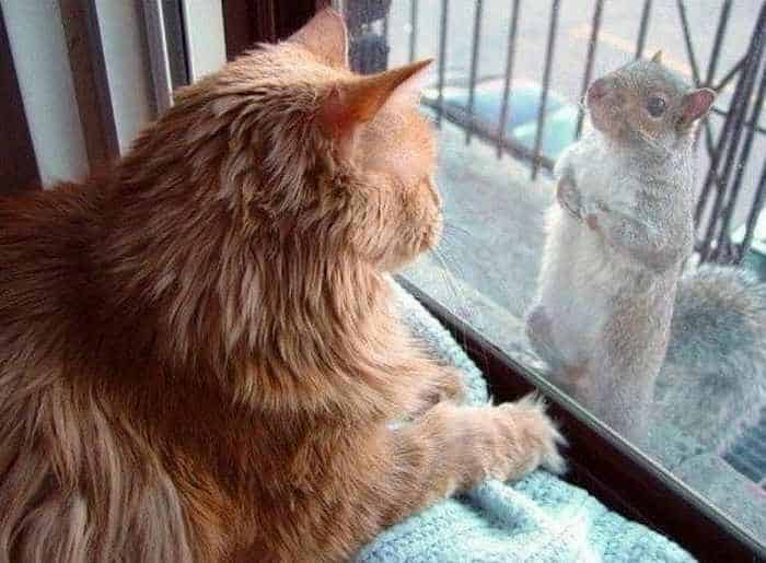 Funny Squirrel Is Very Hungry - 8 Photos-08