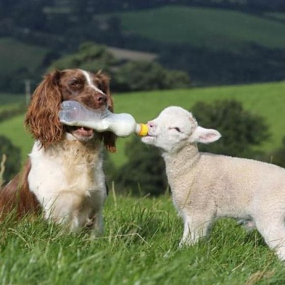 Awesome Funny Friendship Of Dog And Ship Will Blow Your Mind